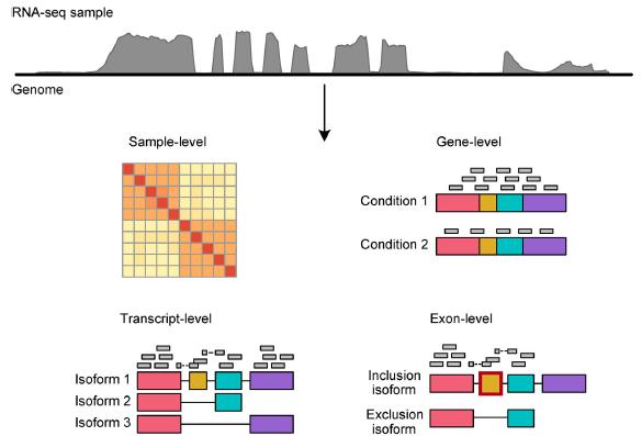 基因组浏览器、热图、定量、差异分析和可变剪接